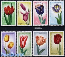 Tulips 8v