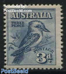 Kookaburra bird 1v