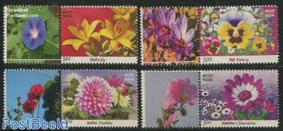 Flowers 4v+tabs