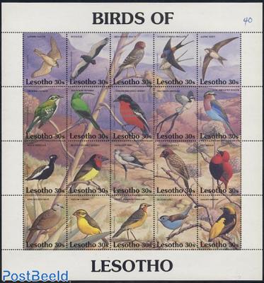 Birds 20v m/s