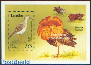 Waterbirds s/s
