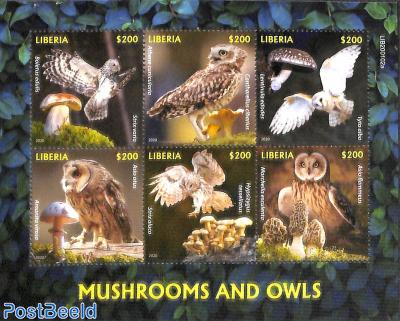 Mushrooms and owls 6v m/s