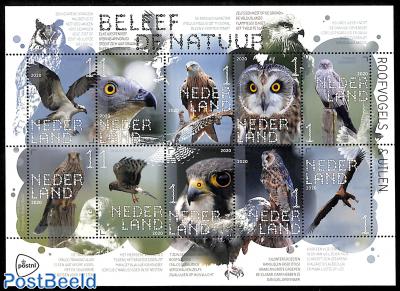 Birds of Prey 10v m/s s-a